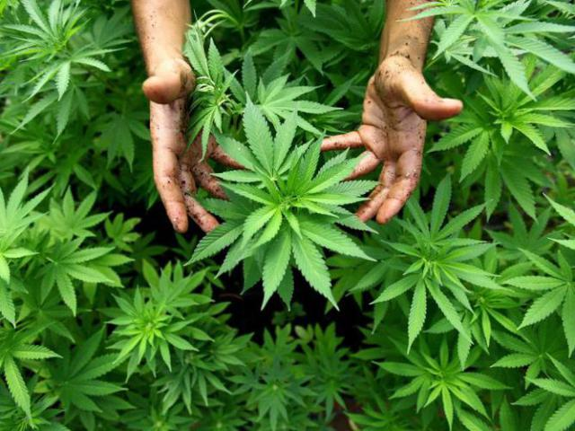 cannabisfund-alte-fabrik-der-fa-bronco-gmbh-singen-egon-schneiderbub